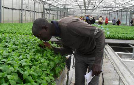 Orto Novo, une ferme de culture de légumes verts sous serre en Suède